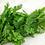 Thumbnail: Cilantro Herb