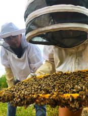 bee keeping.jpg