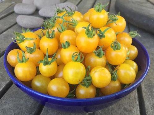 Tomato Ch.: Gold Currant