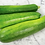Thumbnail: Black Beauty Zucchini Summer squash