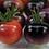 Thumbnail: Blueberry Cherry Tomato
