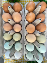 Rainbow Egg CSA add-on courtesy of the FLF Flock