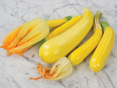 Golden zucchini Summer squash