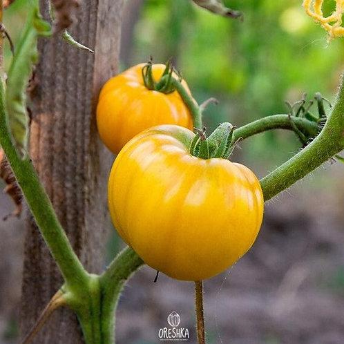 Tomato: Livingston's Golden Queen