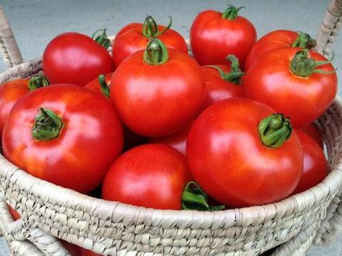 Tomato: Wisconsin 55