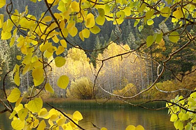 june lake fall.jpg