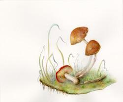 The Little Mushrooms...
