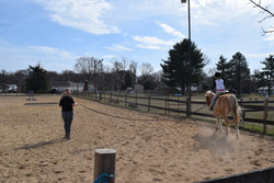 Leadline lesson with Chico!