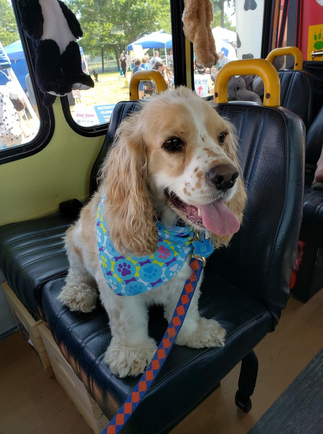 Gus on a Bus