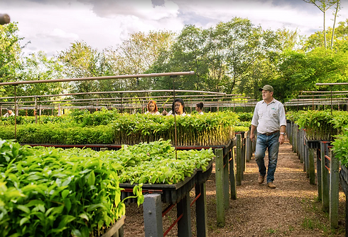 Laury Cullen in the community nursery where they grow seedlings to plant in Brazil's Atlan