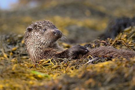 Lara JACKSON wildlife photographer Isle of Mull Dog Otter
