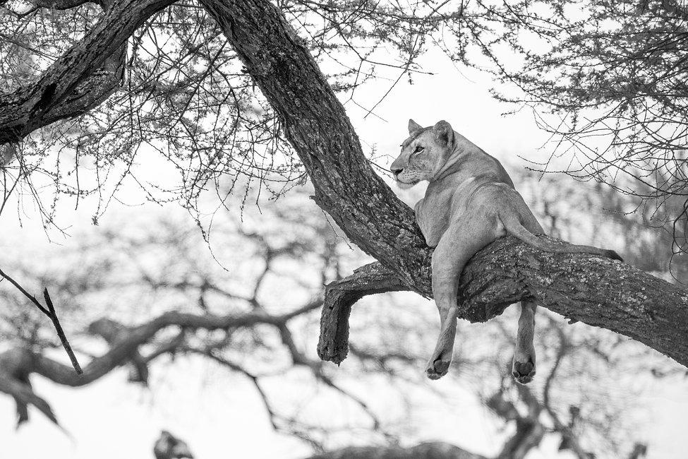© Lara Jackson | @lara_wildlife
