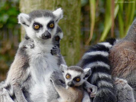 Madagascar: Current Conservation Challenges