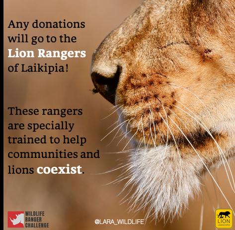 Lara Jackson X Lion Landscapes