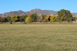 Fall Mountain View