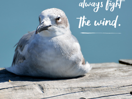 Lessons on rest from seagulls.