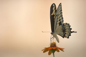 butterfly certainty, caterpillar courage