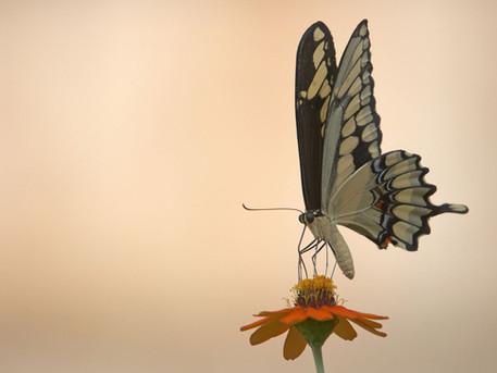 Free My Wings