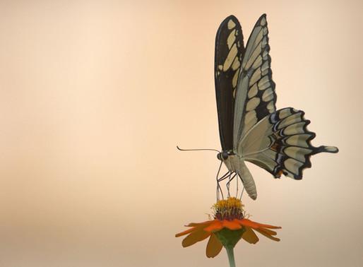 La historia de una mariposa