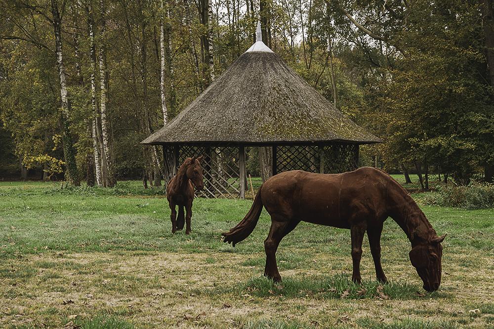 paarden-anholt