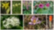 Stinzenplanten.jpg