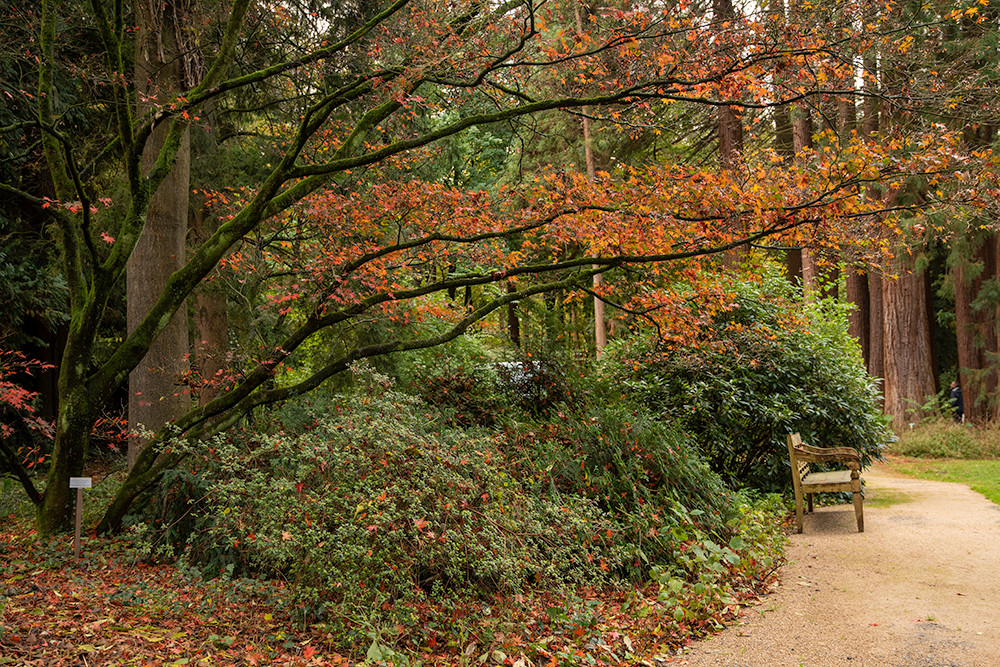 sequoiafarm-boom.jpg
