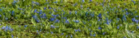 header stinsenplanten.jpg