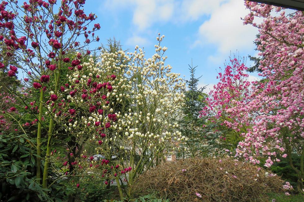 Tuin van Peter Blommerde