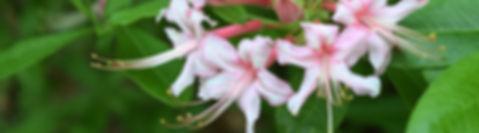 header plant info.jpg