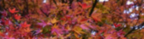 header forstgarten koln.jpg