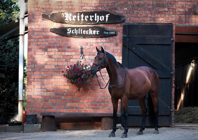 Reiterhof Schliecker