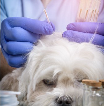 If you love acupuncture, don't you think your pet would love it, too?