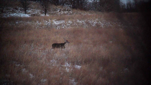 Oklahoma Late Season Buck
