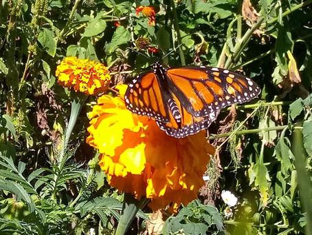 Garden Blog 9/8/20