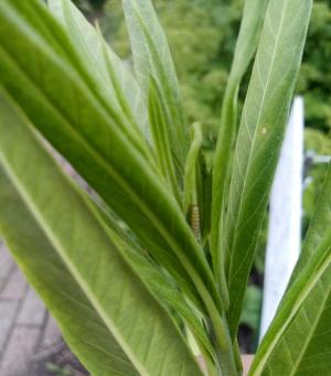 Garden Blog 6/26/20