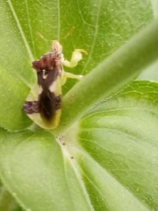 Garden Blog 8/10/20