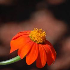 Garden Blog 7/24/20