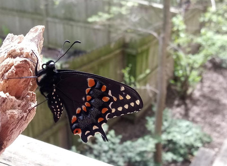 Garden Blog 6/13/20
