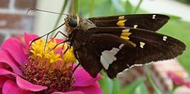 Garden Blog 7/3/20