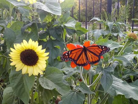 Garden Blog 8/28/20