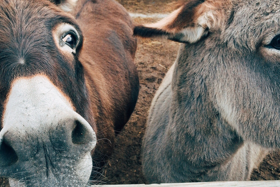 donkeys.png