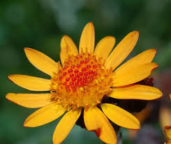 Onguent Arnica & Consoude