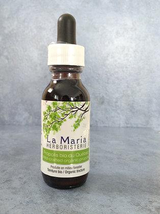 Propolis bio du Québec produite en forêt- 30 ml
