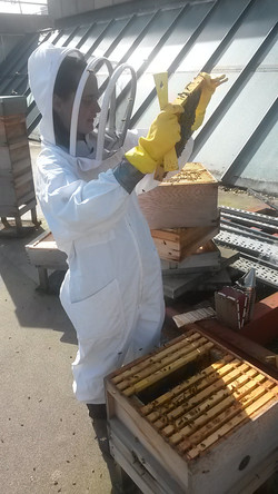 Hives on the roof at Royal Holloway