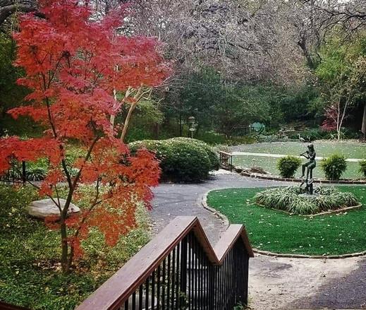 japanese maple in gardens (3).jpg