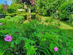 back garden2.jpg
