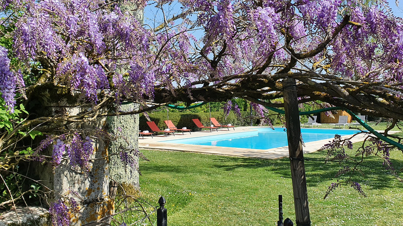 The pool with Spring wisteria