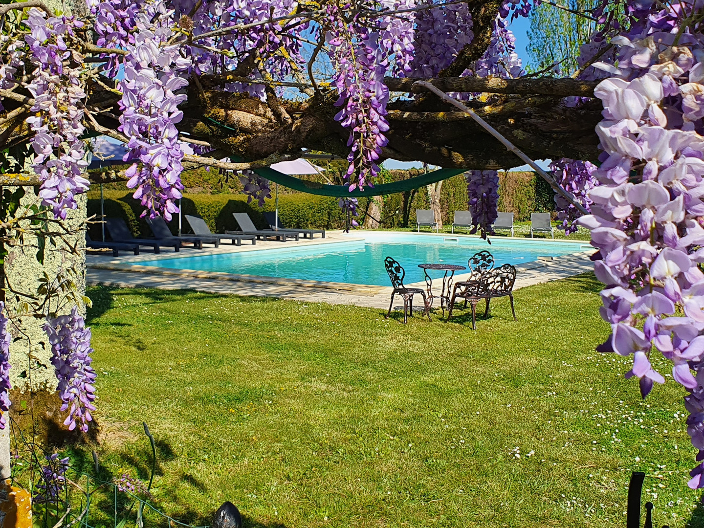 The pool and wisteria