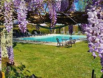 pool wisteria1.jpg