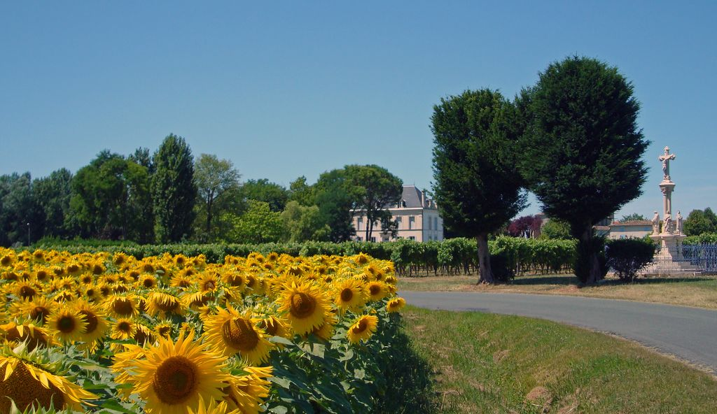 Epargnes village sunflowers
